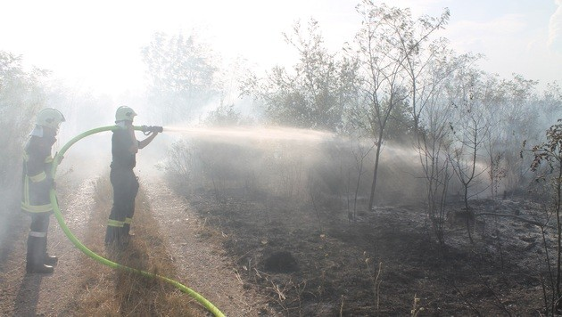 Brand in NÖ: 54 Hektar Wald standen in Flammen (Bild: FF Wiener Neustadt)
