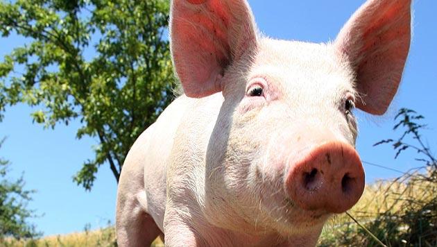 Experten kritisieren neue EU-Fleischkennzeichnung (Bild: Markus Wenzel)