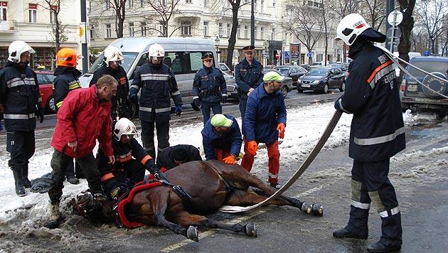 """""""Pferderettung"""" hilft im Notfall rund um die Uhr (Bild: Pferderettung)"""