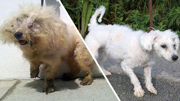 Halter forderte völlig verwahrlosten Hund zurück (Bild: Tierheim Berlin)