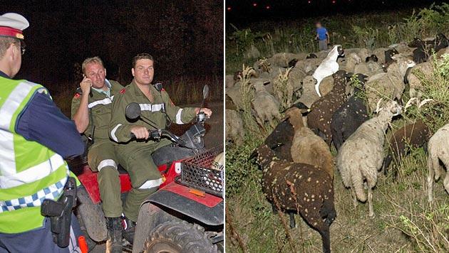 154 entlaufene Schafe hielten Feuerwehr auf Trab (Bild: Stefan Schneider/BFK Baden)