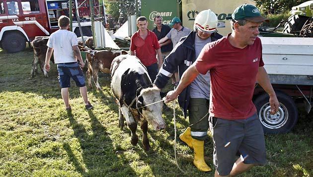 Bauernhof stand in Flammen - etliche Rinder tot (Bild: Markus Tschepp)