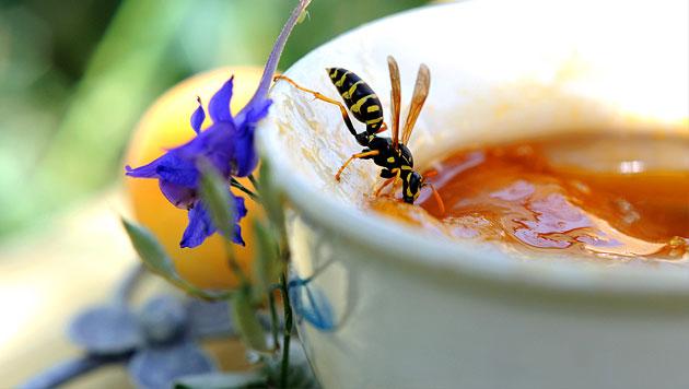 So schützen Sie sich vor Wespen (Bild: thinkstockphotos.de)