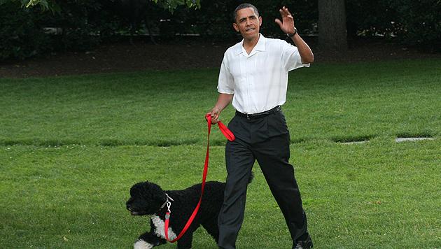 """Obamas Hund """"Bo"""" hat jetzt eine """"kleine Schwester"""" (Bild: EPA)"""