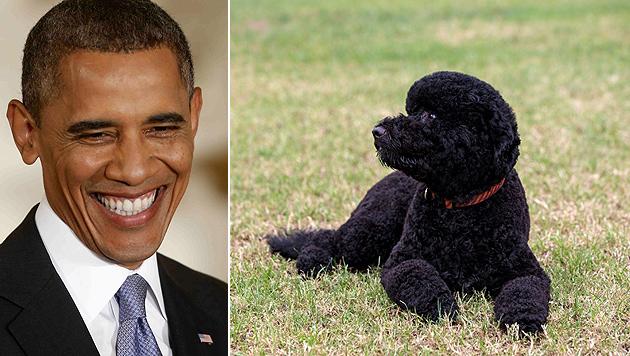 """Obamas Hund """"Bo"""" hat jetzt eine """"kleine Schwester"""" (Bild: EPA, The White House)"""