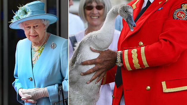 Schwan der Queen gegrillt und gegessen (Bild: EPA)