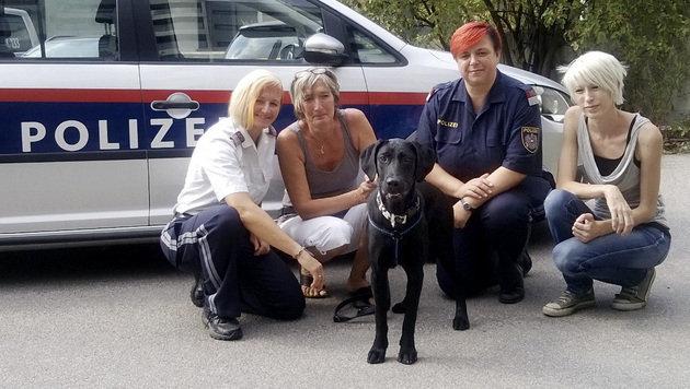 Tierquälerei in Wien: Hund von Polizei gerettet (Bild: APA/POLIZEI)