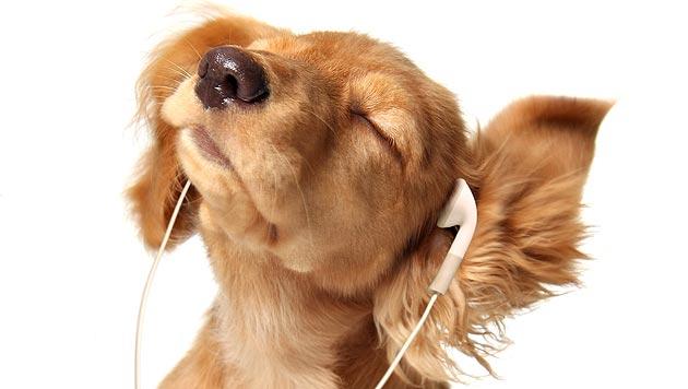 Immer im Takt: Auch Heimtiere haben Lieblingsmusik (Bild: thinkstockphotos.de)