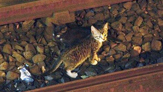 Kätzchen bringen New Yorker U-Bahn zum Stillstand (Bild: AP)