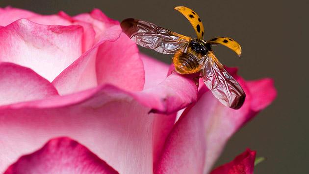 Statt Gift lieber auf Schädlings-Feinde setzen (Bild: thinkstockphotos.de)