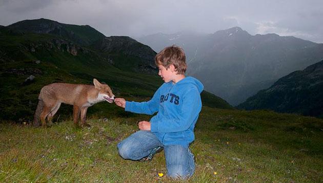 """""""Alpen-Mogli"""" Matteo spricht jetzt mit einem Fuchs (Bild: Michaela Walch)"""
