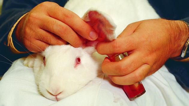 EU-Bürgerinitiative im Kampf gegen Tierversuche (Bild: thinkstockphotos.de)