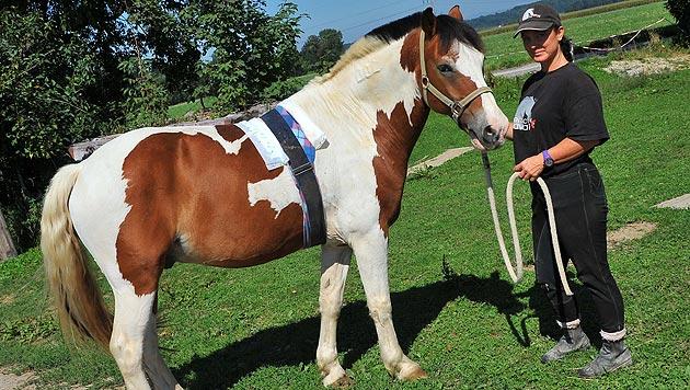 Drama um Pony: Tiefe Wunde hat sich entzündet (Bild: Horst Einöder)