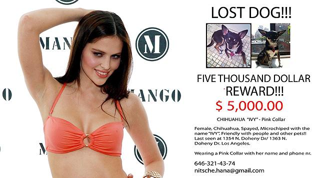Hund gefunden: Model Nitsche verweigert Belohnung (Bild: EPA, Facebook)