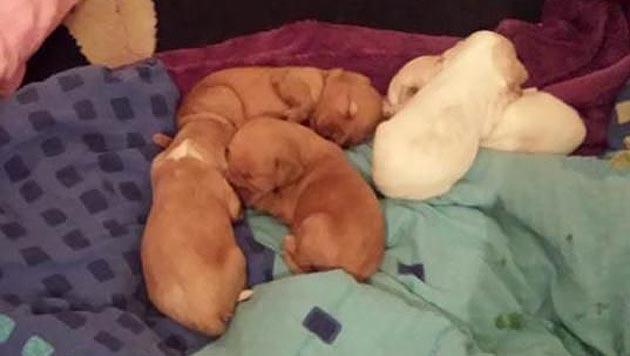 Hundehalterin wurden verwahrloste Tiere abgenommen (Bild: Polizei)