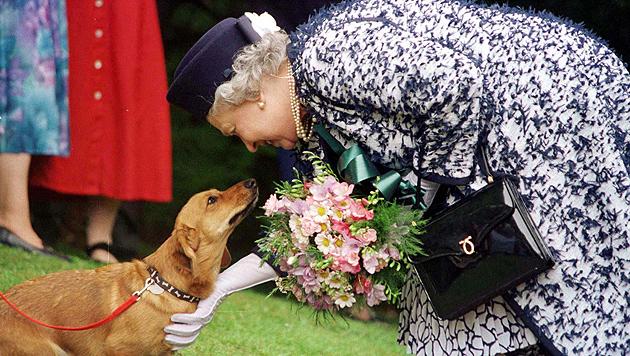 Neues Buch: Bei der Queen leben Hunde königlich (Bild: AP)