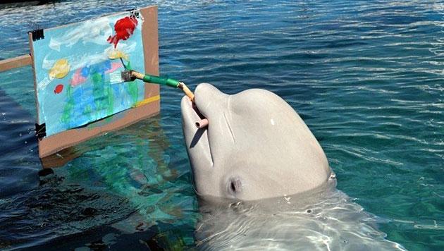 Aquarium in Japan lässt Belugawale Bilder malen (Bild: AFP)