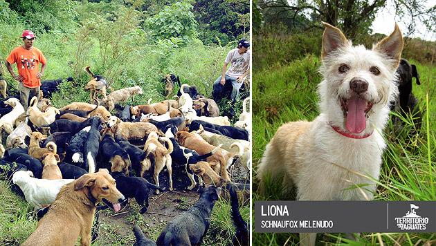 "Tierheim vermittelt Mixe als ""neue"" Hunderassen (Bild: Territorio de Zaguates)"