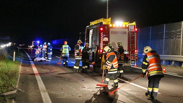 Pferd auf Autobahn von Tierärztin niedergefahren (Bild: laumat.at/Matthias Lauber)