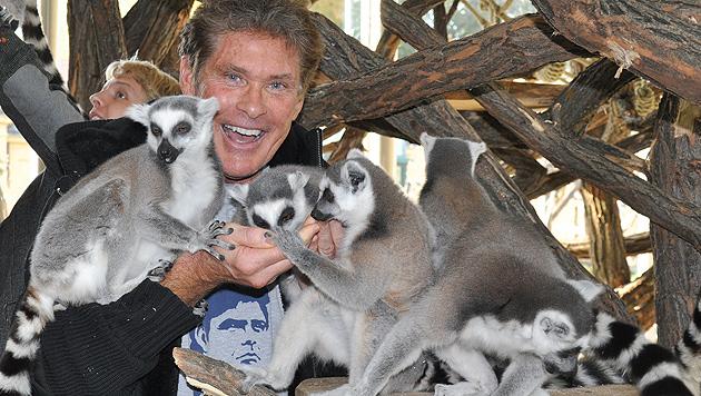 David Hasselhoff kuschelte mit Wiener Lemuren (Bild: Tiergarten Schönbrunn/Harald Schwammer)