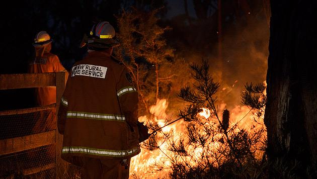 Helfer suchen von Buschbränden verletzte Tiere (Bild: EPA)