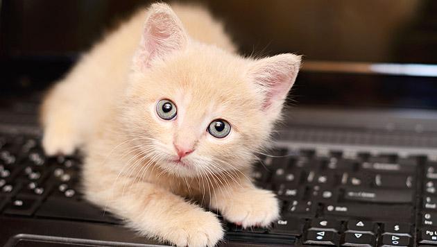 10 Jahre YouTube: Publikumsmagnet mit Katzenvideos (Bild: thinkstockphotos.de)