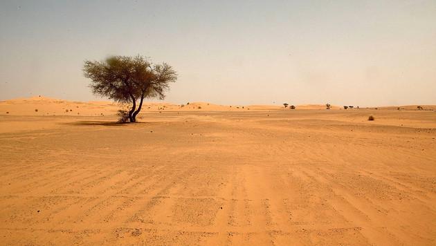 In Wüste verirrt: Österreicher in Israel gerettet (Bild: AFP (Symbolbild))