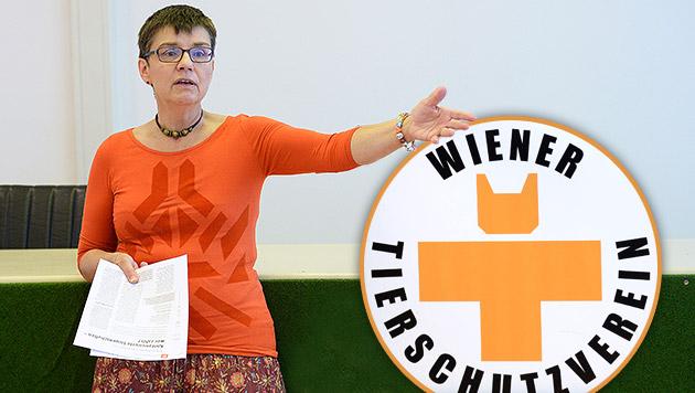 WTV darf sein Logo behalten - Rotes Kreuz beruft (Bild: APA/ROBERT JAEGER, krone.at-Grafik)