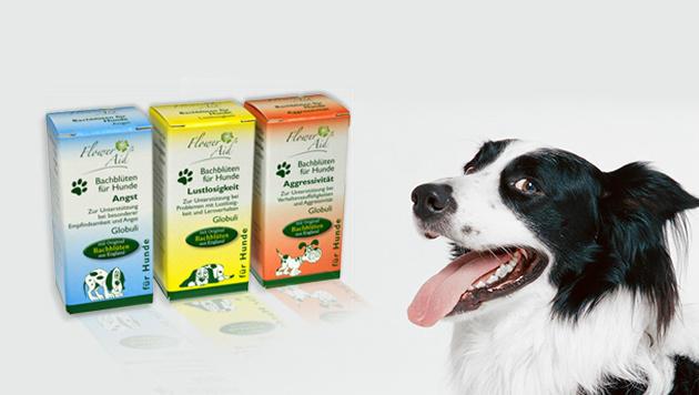 Bachblüten Globuli als Hilfe in der Hundeerziehung (Bild: thinkstockphotos,de, ECA-Medical, krone.at-Grafik)
