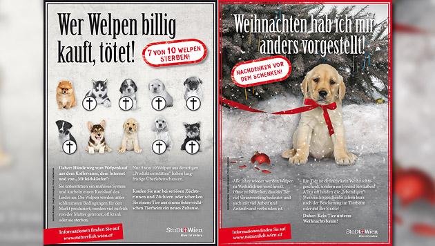 Kampagne gegen illegalen Handel mit Hundewelpen (Bild: APA/MA 60)