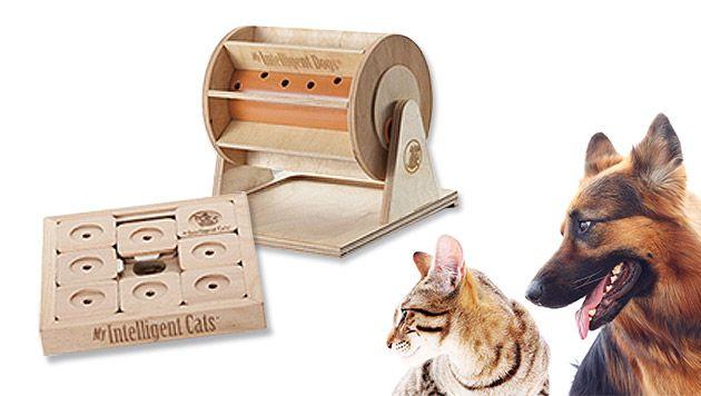 Intelligenzspielzeug für Haustiere liegt im Trend (Bild: My Intelligent Dogs, thinkstockphotos.de, krone.at-Grafik)