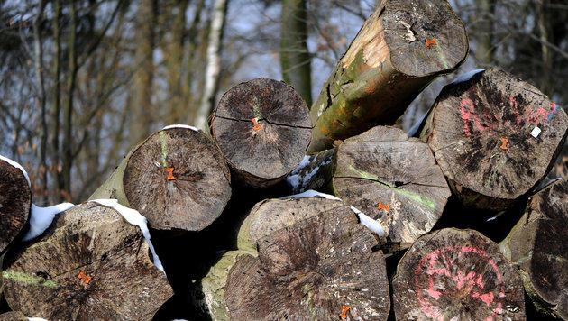 Asiatischer Baumpilz zerstört heimische Eschen (Bild: dpa/Caroline Seidel)