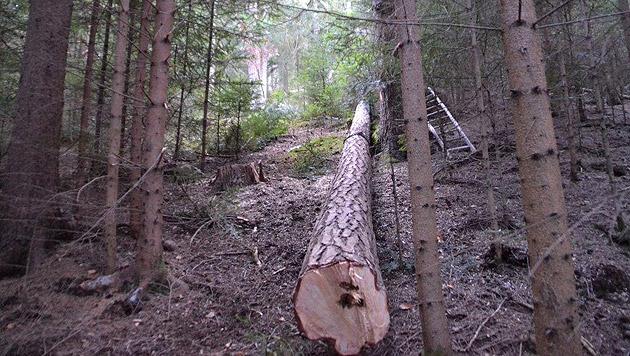 NÖ: Landwirt von umstürzendem Baum schwer verletzt (Bild: Einsatzdoku.at)