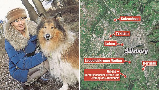 """Salzburger Hundehalter wegen Fleischködern besorgt (Bild: Markus Tschepp, """"Krone""""-Grafik)"""