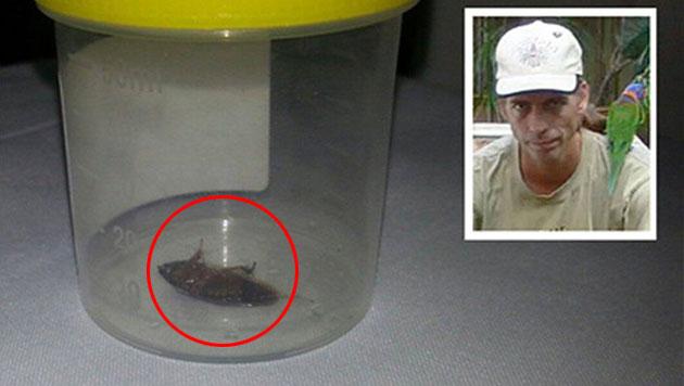 Ärztin zieht Australier Kakerlake aus dem Ohr (Bild: Hendrik Helmer)