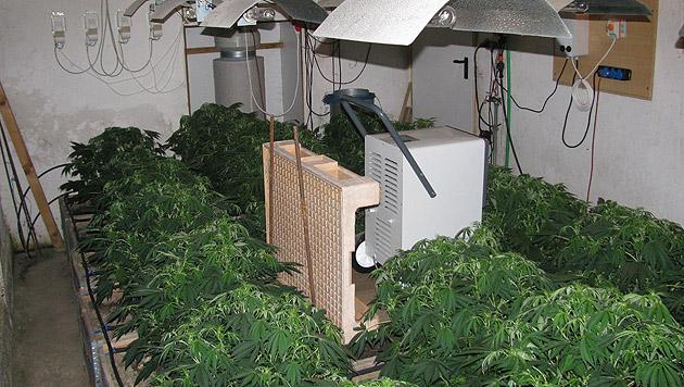 Polizei entdeckt Cannabisplantage im Weinviertel (Bild: LPD NÖ)