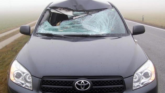 Reh landet bei Kollision mit Auto am Beifahrersitz (Bild: Polizei)