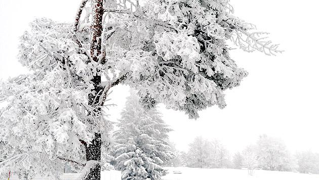Schneefall und Kälte: Frau Holle beehrt Österreich (Bild: APA/BARBARA GINDL)
