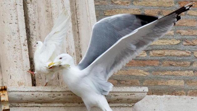 Tierschützer fordern Tauben-Verbot für Papst (Bild: EPA)