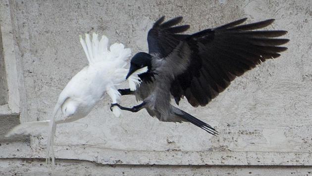 Tierschützer fordern Tauben-Verbot für Papst (Bild: AP)