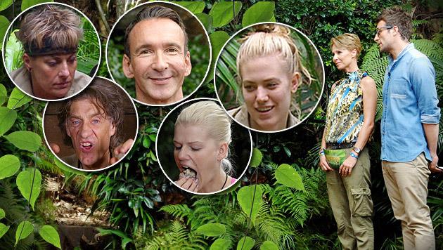 Das sind die letzten fünf Dschungel-Kandidaten (Bild: RTL/Stefan Menne, thinkstockphotos.de, krone.at-Grafik)