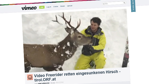 Tiroler Filmteam befreit Hirsch aus Schneemassen (Bild: Screenshot vimeo.com/Simon Platzer)