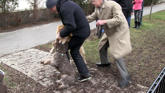 "Benimm-Papst Elmayers ""Rex"" fällt anderen Hund an (Bild: krone.tv)"