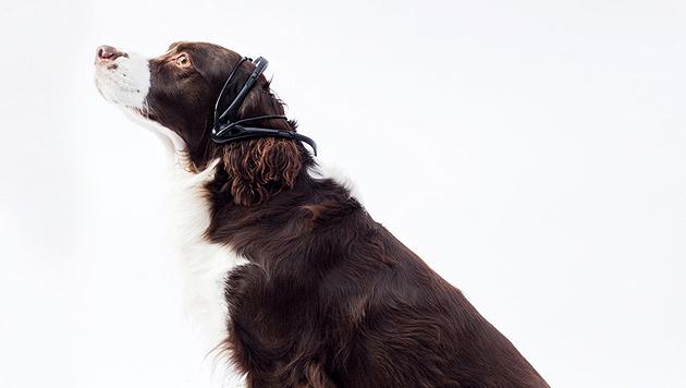 Hundegedanken bald für Menschen verständlich (Bild: http://nomorewoof.com)