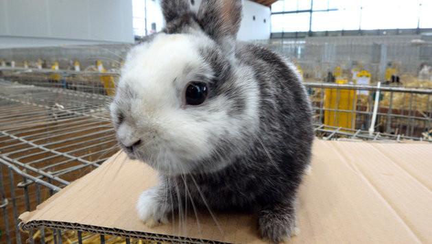 Schwer kranke Kaninchen in OÖ einfach ausgesetzt (Bild: dpa/Patrick Seeger (Symbolbild))
