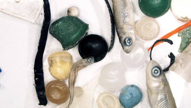 Mehr Plastik als Jungfische in der Donau (Bild: APA/UNIVERSITÄT WIEN/AARON LECHNER)