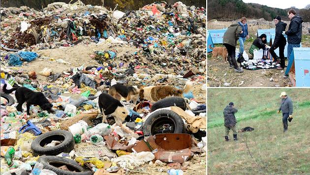 """Die """"Müllhunde"""" von Bosnien sind in großer Gefahr (Bild: THINO - Tierherzen in Not e.V.)"""