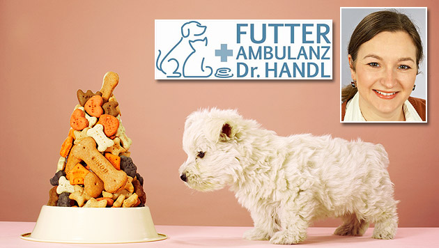 """Die """"Futterambulanz"""" berät rund um die Ernährung (Bild: thinkstockphotos.de, Futterambulanz)"""