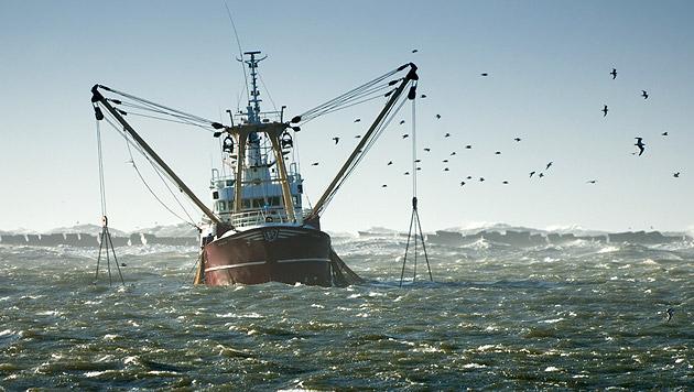 WWF warnt: Überfischung bedroht Mensch und Natur (Bild: thinkstockphotos.de)