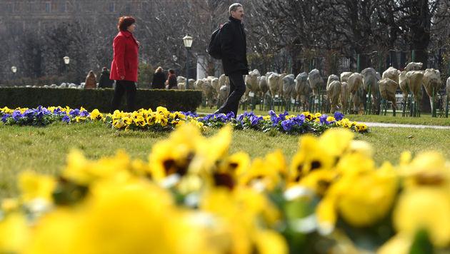 Frühlingsbeginn mit Temperaturen von über 20 Grad (Bild: APA/HEF)